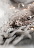 Cute little gray kitten is sleeping on a soft gray knitted plaid. Cozy home background with funny pet. Fluffy pet comfortably settled to sleep.