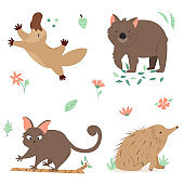 Set of Australian animals platypus, wombat, echidna, possum. Animal character design