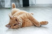 A cute tabby cat is relaxing on the floor and is very adorable.