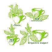Stevia and cup set. Vector organic symbol
