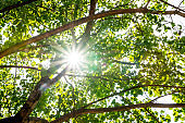 Sunlight under the shade of trees background
