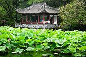guyi garden lotus pond shanghai china
