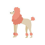 Pink cartoon poodle drawing isolated on white background