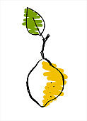 Lemon. Hand drawn vector illustration for teaching aid, price tag, fruit stores and farm markets promotion