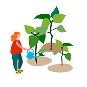 Woman watering seedlings. Spring and early summer gardening concept