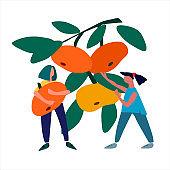 Women picking mandarins. Harvesting concept. Agritourism concept