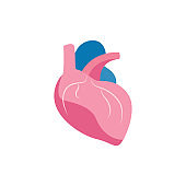 Icon or medical image of human heart flat vector illustration isolated on white.