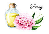 Pink peony Flowers and aroma essential oil in the bottle. Hand drawn watercolor illustration, isolated on white background