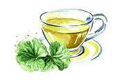 Gotu kola herbal tea, centella asiatica, ayurveda herbal medicine against cancer. Watercolor hand drawn illustration isolated on white background