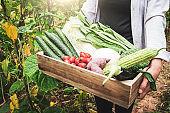 Farmer holding fresh vegetables in field