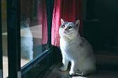 A cute stands by a windowsill