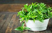 Fresh organic mint leafs in the bowl