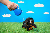 Artificial imitation of walking with dog prosecc. The human hand holding reel with leash for pet soft toy dachshund on green grass lawn, blue sky with white clouds background