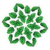 Mandala with mint leaves. Cartoon design for packaging, textile, invitations.