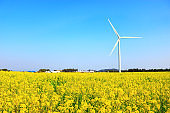 Rape blossom festival, rape seed, flower, spring, wind turbine, clean energy, electricity,