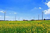 Jeju wind turbines, clean energy, rural areas, meadows, fields,