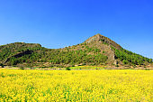Dangshan, Ba-rising, rape blossoms, garlic, rural, farming,