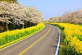 Noksan Road, Cherry Blossoms, Rape Blossoms, Festivals, Roads, Flower Paths, Rural Areas,