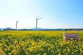 Rape blossom festival, rape seed, flower, spring, wind turbine, clean energy, electricity,
