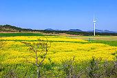 Wind turbines, clean energy, generators, energy, rape blossoms, spring