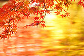 Autumn leaves reflected on the surface of the pond