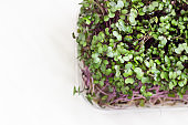 Red cabbage or radish microgreens sprouts in plastic container. Seed germination at home. Vegan and healthy eating concept. Top view, copy space.