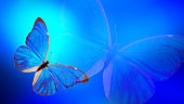 blue butterfly on a color gradient background.