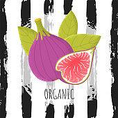 Organic figs fruit in modern flat style