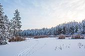 Ski tracks on the snow. Winter landscape. Russia