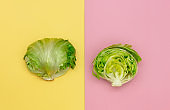 Fresh cabbage on pink and yellow backgrounds