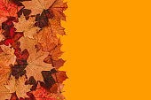 Maple leaves on an orange background with a copy of the space. Autumn background.