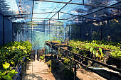 Greenhouse with cultivation of several plants