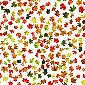 Seamless floral pattern. Autumn yellow red, orange leaf isolated on white. Colorful maple foliage. Season leaves fall background.