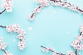 Spring background table. May flowers and April floral nature on blue. For banner, branches of blossoming cherry against background. Dreamy romantic image, landscape panorama, copy space.