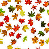 Seamless wallpaper. Autumn yellow red, orange leaf isolated on white. Colorful maple foliage. Season leaves fall background.