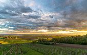 Idyllic rural landscape with vineyard