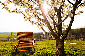 Rear view of a wooden lounge chair in a meadow under a blossoming cherry tree in the countryside
