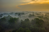 Aerial view of mysterious foggy forest at dawn