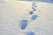 Footprints on white snow in a forest.