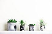 Marbled geometric succulent planters with beautiful tiny plants