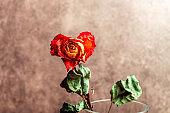 Dried orange rose,beautiful faded flower