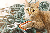 Curious cat lying on climbing rope with equipment.
