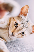 Portrait of playful kitten staring at camera.