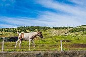 Side portrait of a horse in the field, Jeju Island, South Korea - August 17, 2019