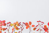 Flat lay composition with colorful autumn leaves and small red apples on a white background