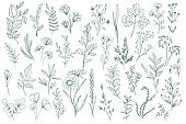 Hand drawn floral decorative elements set. Isolated pack of botanical clipart. Green leaves, flowers and herbs vector illustration.