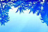 Abstract summer background. Blurred reflections of tropical trees , palm trees in the blue water of the pool.