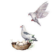 Watercolor composition of birds with dove and nest. Hand-painted spring nest with pigeon, eggs and branch isolated on white background. Holiday wildlife illustration for design, print, or background.