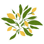Composition from lemon, twigs and foliage on white background. Abstract botanical sketch hand drawn in style doodle.