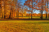 """Autumn forest with yellow trees. Falling leaves natural background.  Autumn landscape.""""n"""